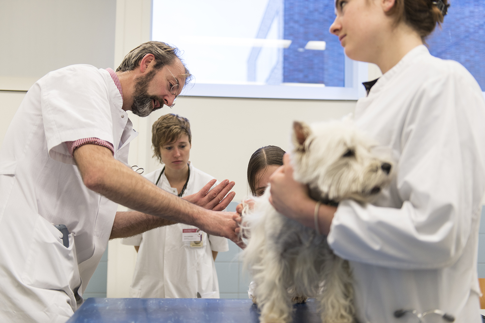 Health Professions Education veterinarians